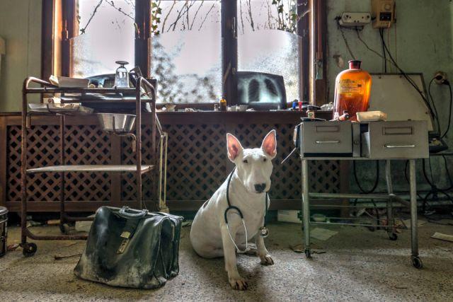 exploracion-lugares-abandonados-perro-claire-alice-van-kempen (10)