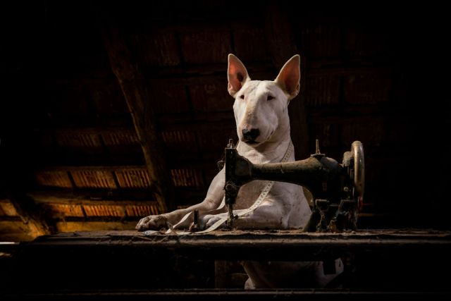 exploracion-lugares-abandonados-perro-claire-alice-van-kempen (14)