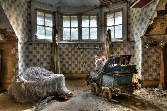exploracion-lugares-abandonados-perro-claire-alice-van-kempen (16)