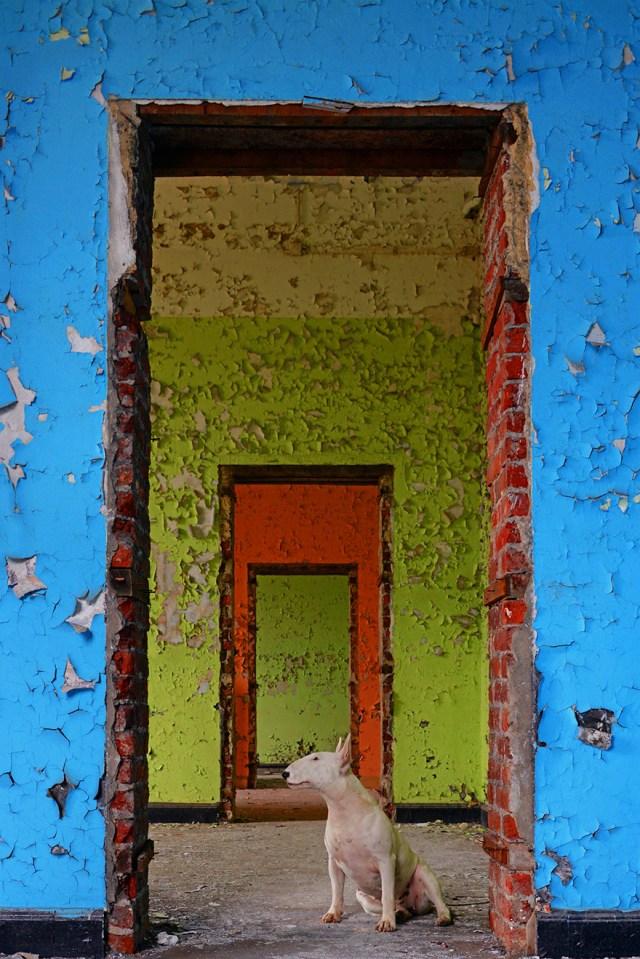 exploracion-lugares-abandonados-perro-claire-alice-van-kempen (5)