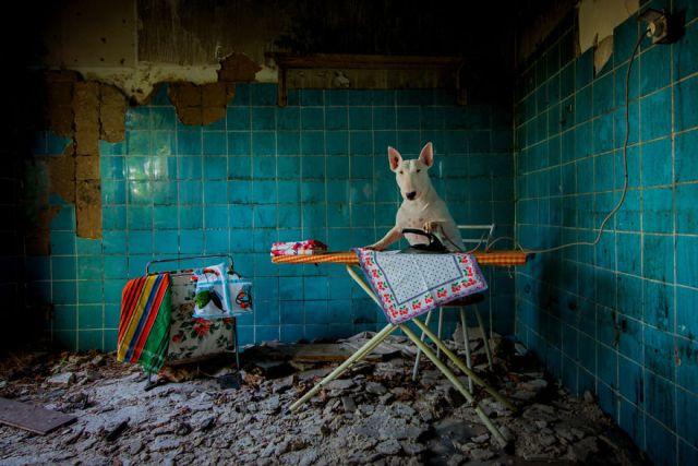 exploracion-lugares-abandonados-perro-claire-alice-van-kempen (7)
