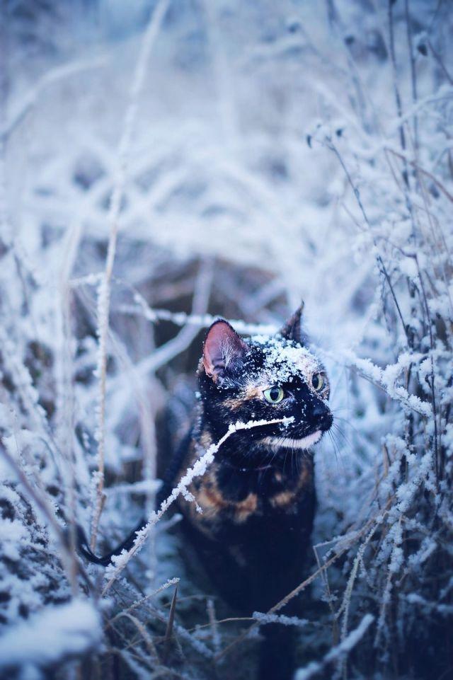 fotos-gato-estaciones (5)