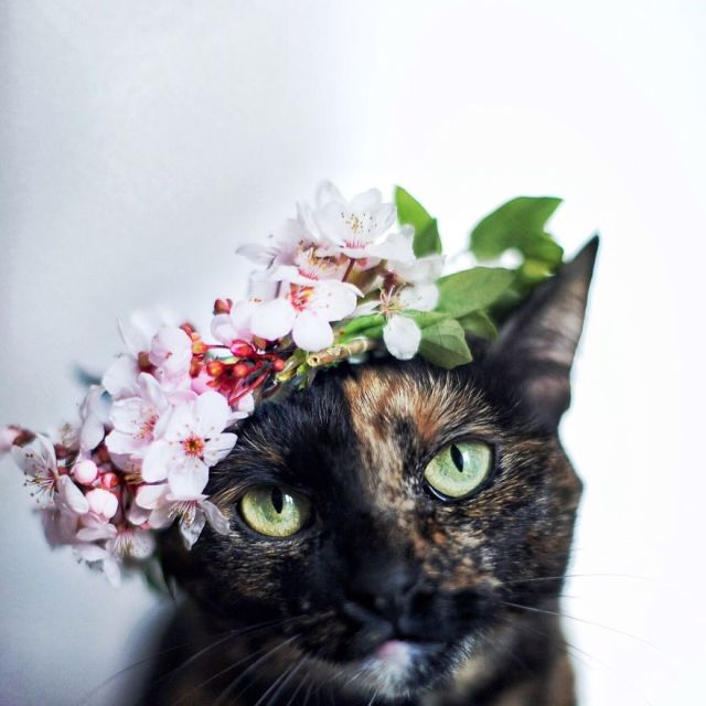 fotos-gato-estaciones (6)
