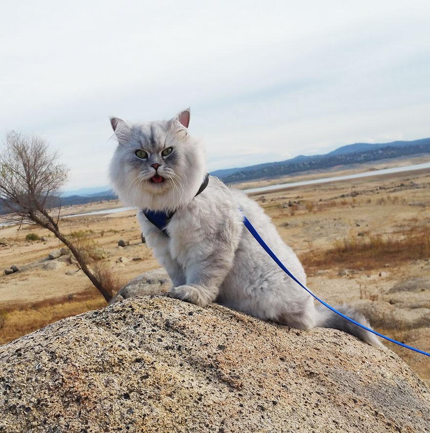 gandalf-gato-viajero (1)
