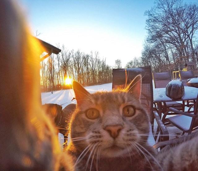 gato-manny-selfies-camara-gopro (3)