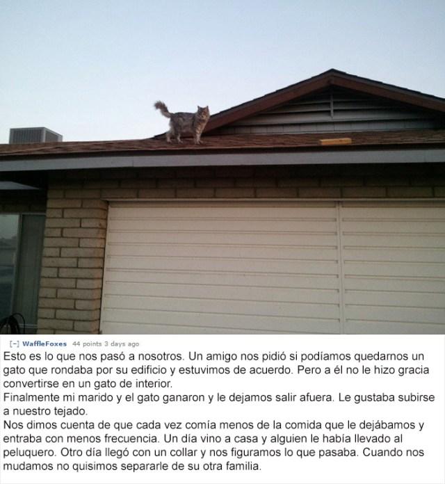 gato-mascota-nala-familia-secreta-(2)