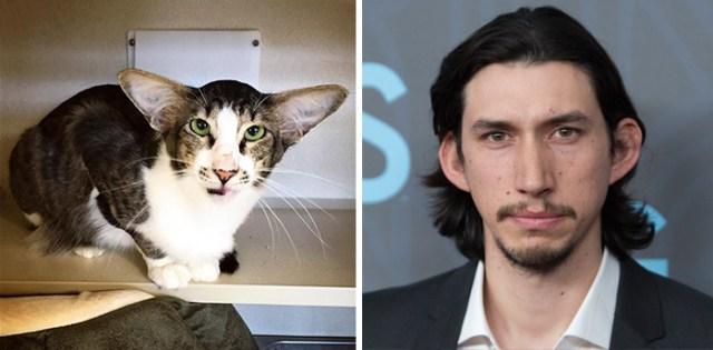 gato-parecido-adam-driver (4)