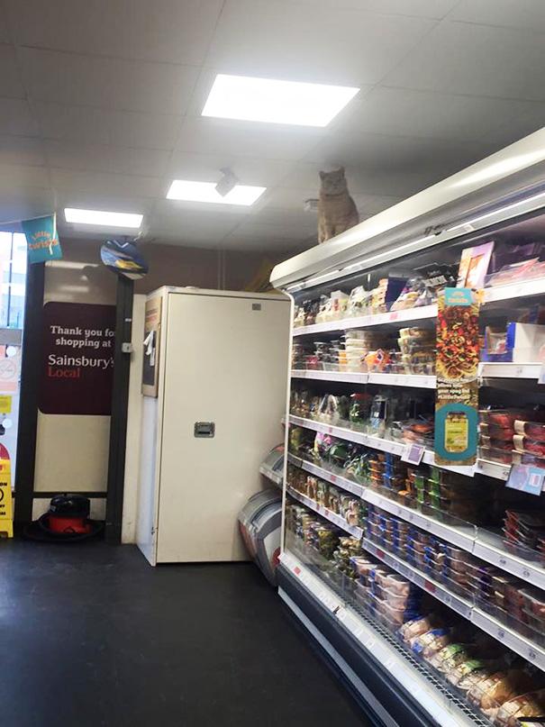 gato-supermercado-sainsburys-londres-olly-oliver (6)