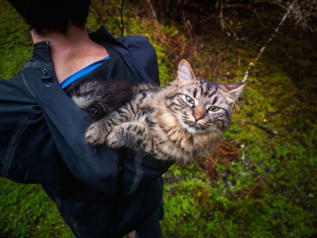 gatos-abandonados-aventureros-bolt-keel (1)