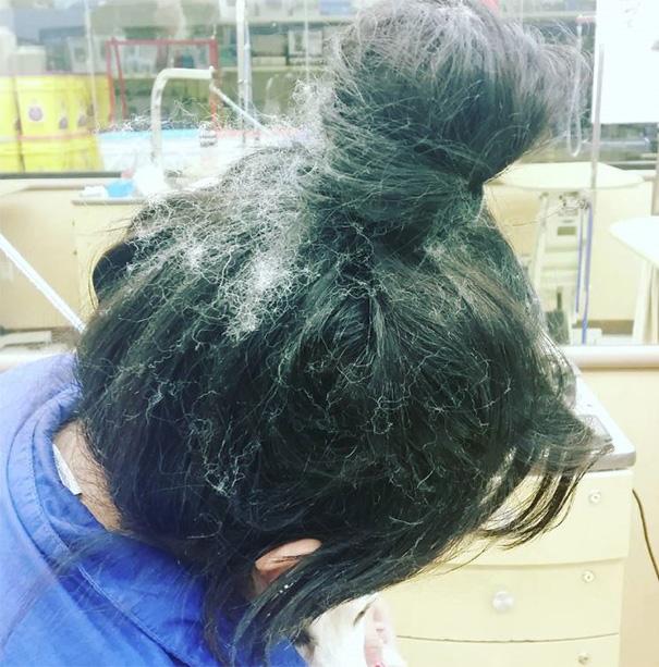 mascotas-soltando-pelo (52)