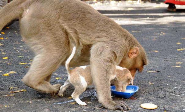 mono-adopta-cachorro-perro-india (1)
