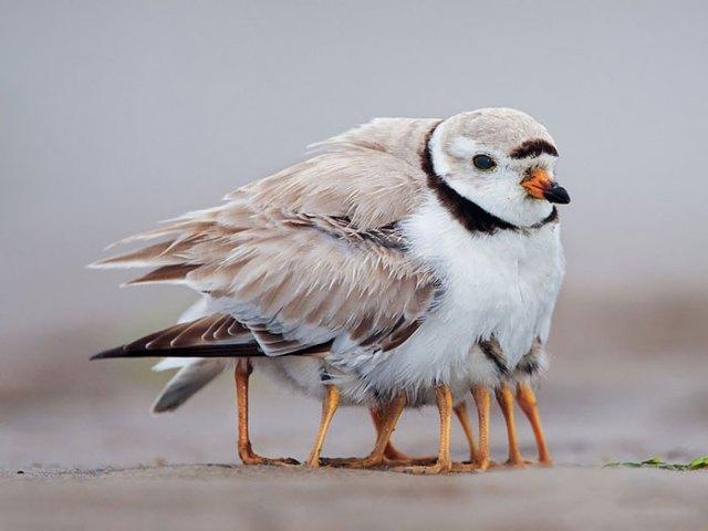 padres-pajaro-polluelos (13)