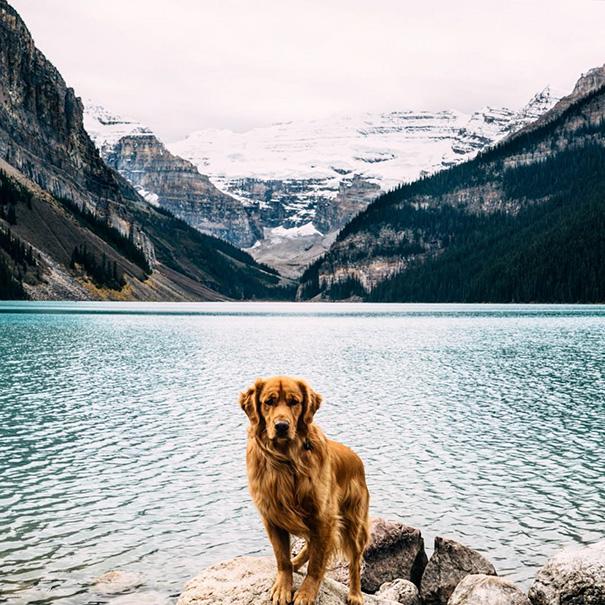perro-aspen-viajes-aventura-hunter-lawrence (1)