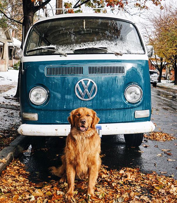 perro-aspen-viajes-aventura-hunter-lawrence (11)