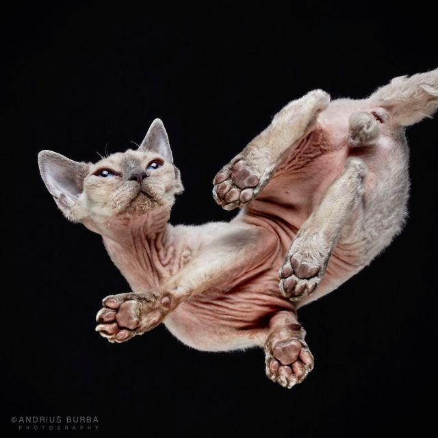 under-cats-fotos-gatos-debajo-andrius-burba (11)