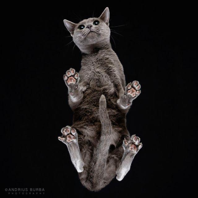 under-cats-fotos-gatos-debajo-andrius-burba (18)