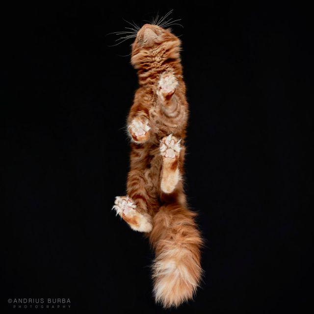under-cats-fotos-gatos-debajo-andrius-burba (4)