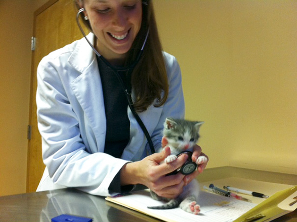 ventajas-trabajar-animales-veterinaria (15)