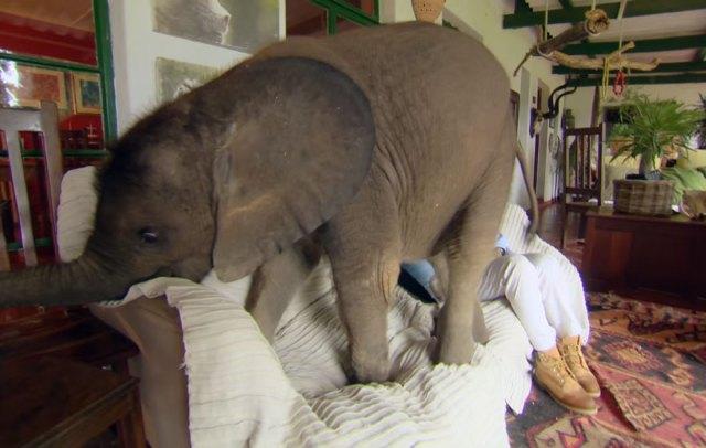 cria-elefante-rescatada-moyo-roxy-danckwerts-zimbabue (1)