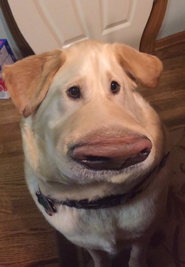 filtro-snapchat-perro-dug-pelicula-up (3)