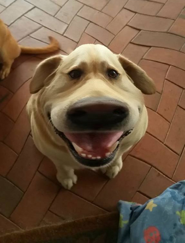 filtro-snapchat-perro-dug-pelicula-up (4)