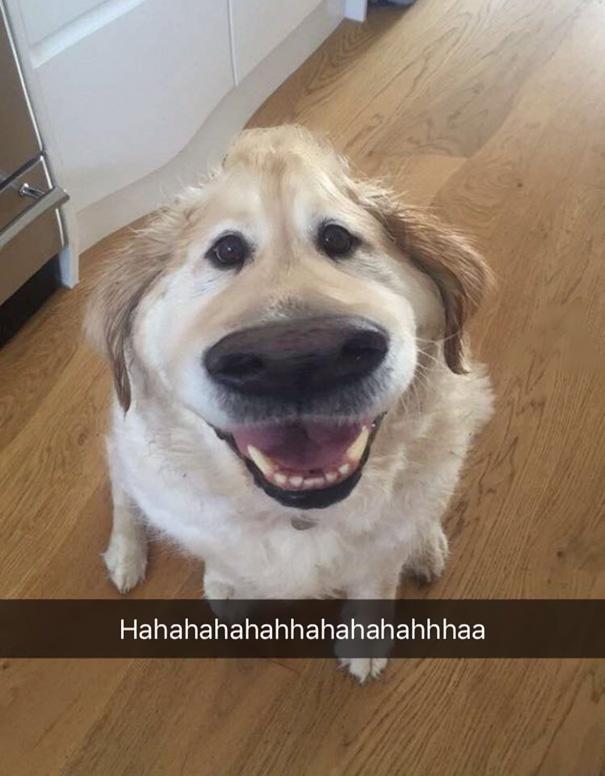 filtro-snapchat-perro-dug-pelicula-up (8)