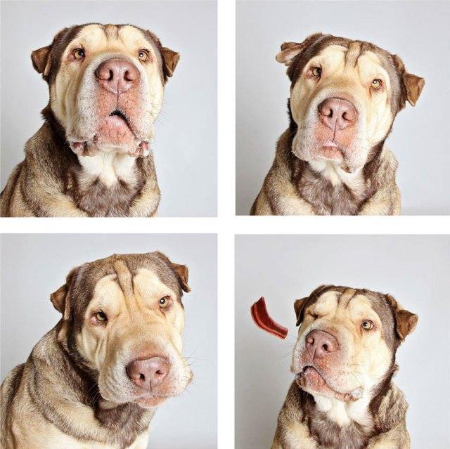 fotomaton-adopcion-perros-organizacion-humanitaria-utah-2 (4)