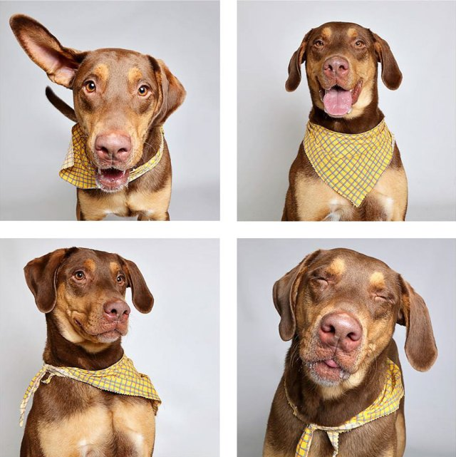 fotomaton-adopcion-perros-organizacion-humanitaria-utah-2 (5)
