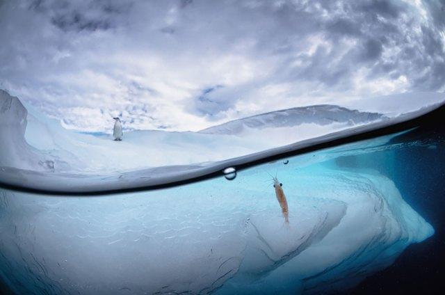 fotos-sobre-bajo-agua (1)