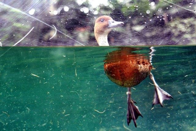 fotos-sobre-bajo-agua (18)