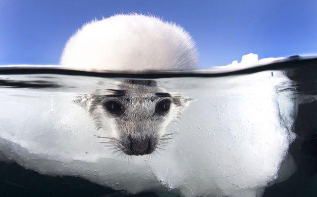 fotos-sobre-bajo-agua (7)