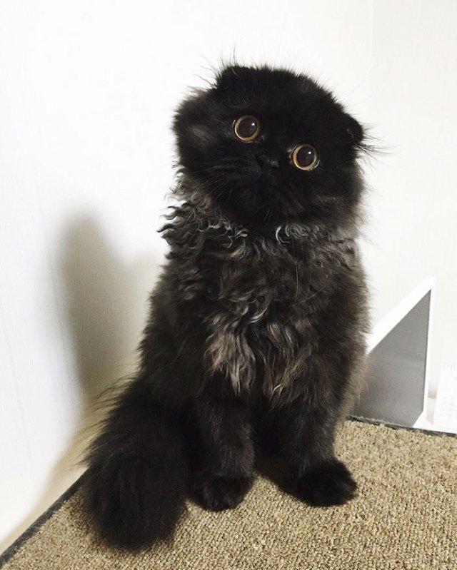 gato-negro-adorable-ojos-grandes-gimo (13)
