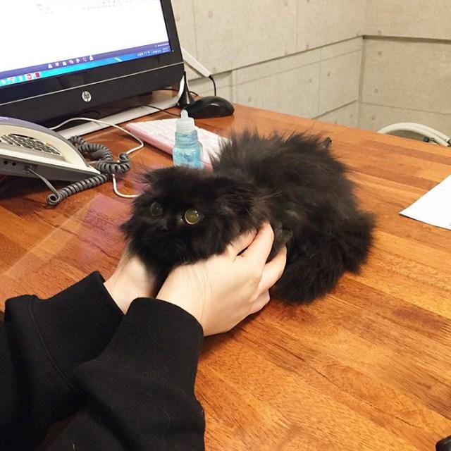 gato-negro-adorable-ojos-grandes-gimo (5)