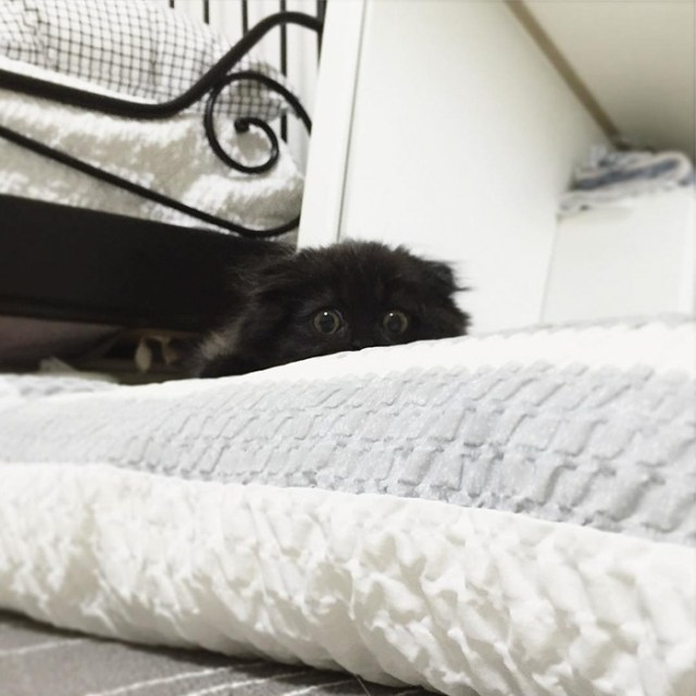 gato-negro-adorable-ojos-grandes-gimo (8)