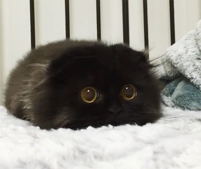 gato-negro-adorable-ojos-grandes-gimo (9)