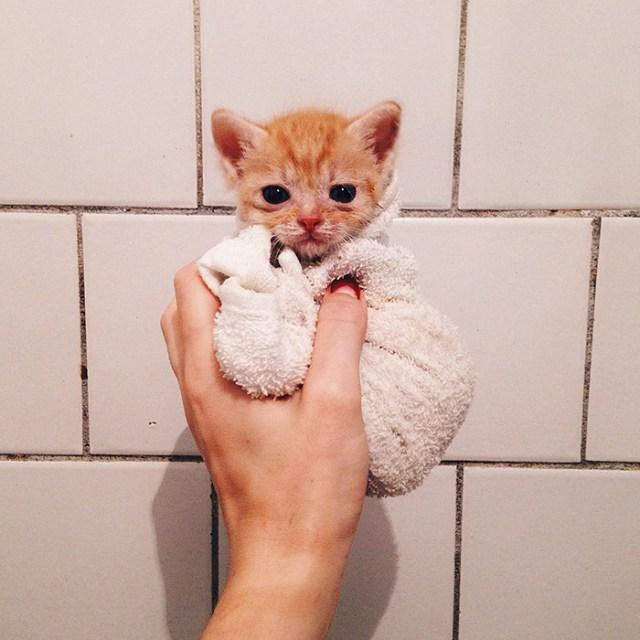 gatos-hermanos-huerfanos-rescatados-anyagrapes (16)