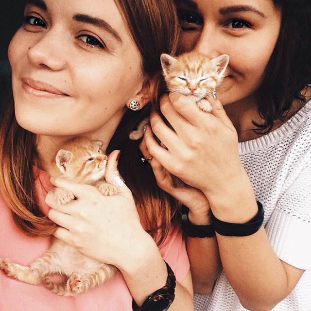 gatos-hermanos-huerfanos-rescatados-anyagrapes (17)