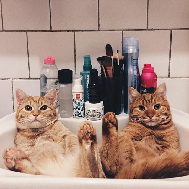 gatos-hermanos-huerfanos-rescatados-anyagrapes (2)