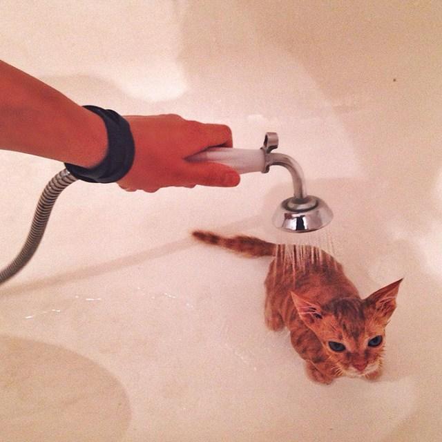 gatos-hermanos-huerfanos-rescatados-anyagrapes (3)