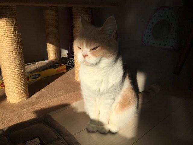 koyuki-gato-enfadado-japones (10)