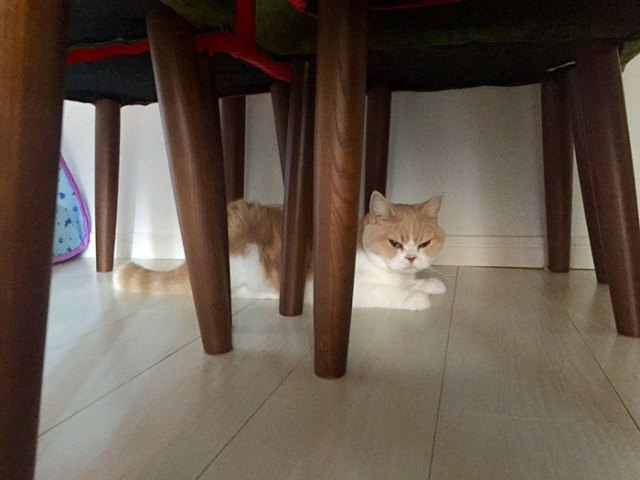 koyuki-gato-enfadado-japones (12)