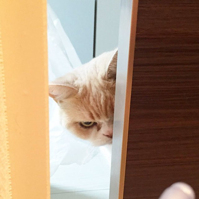 koyuki-gato-enfadado-japones (14)