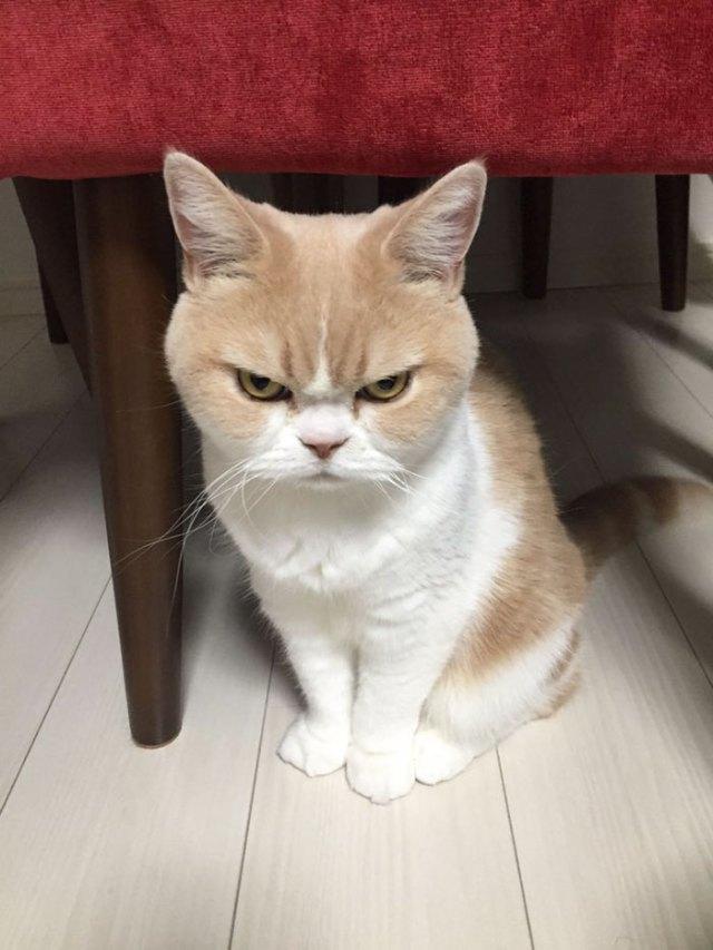 koyuki-gato-enfadado-japones (5)