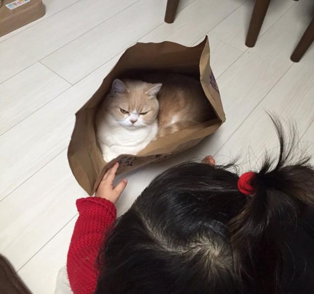 koyuki-gato-enfadado-japones (9)