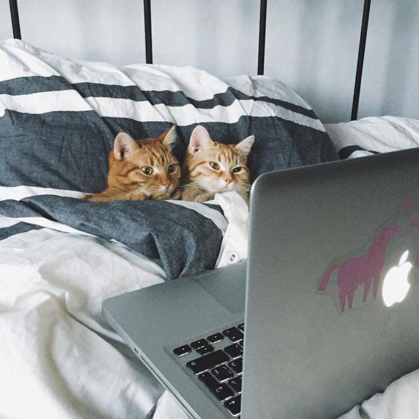 parejas-gatos-san-valentin-35