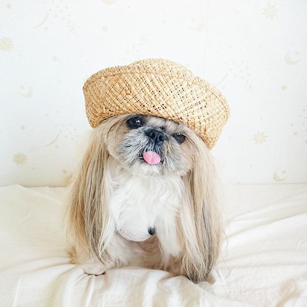 perro-kuma-peinados-diarios-instagram-moemn (11)