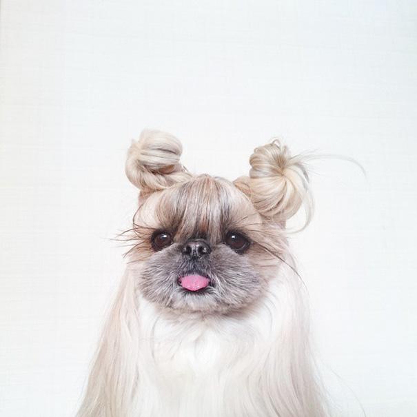 perro-kuma-peinados-diarios-instagram-moemn (13)