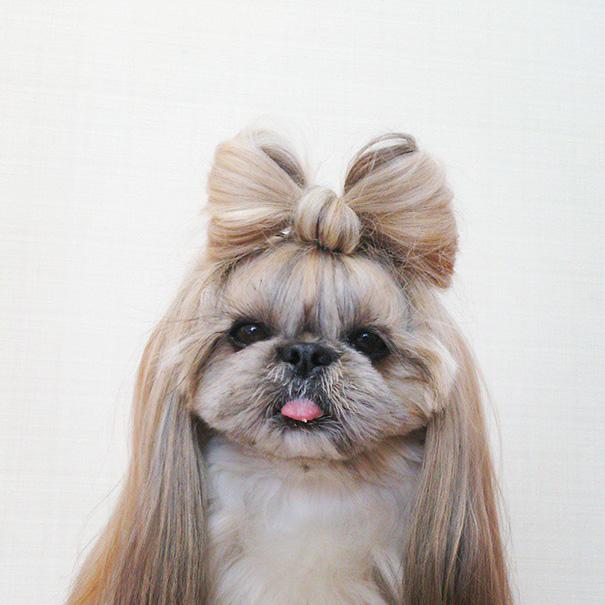 perro-kuma-peinados-diarios-instagram-moemn (4)