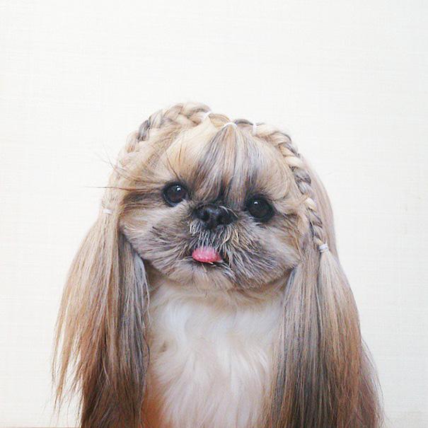 perro-kuma-peinados-diarios-instagram-moemn (7)