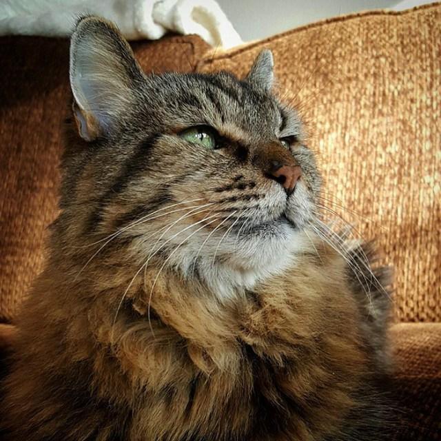 record-gato-viejo-mundo-corduroy (12)
